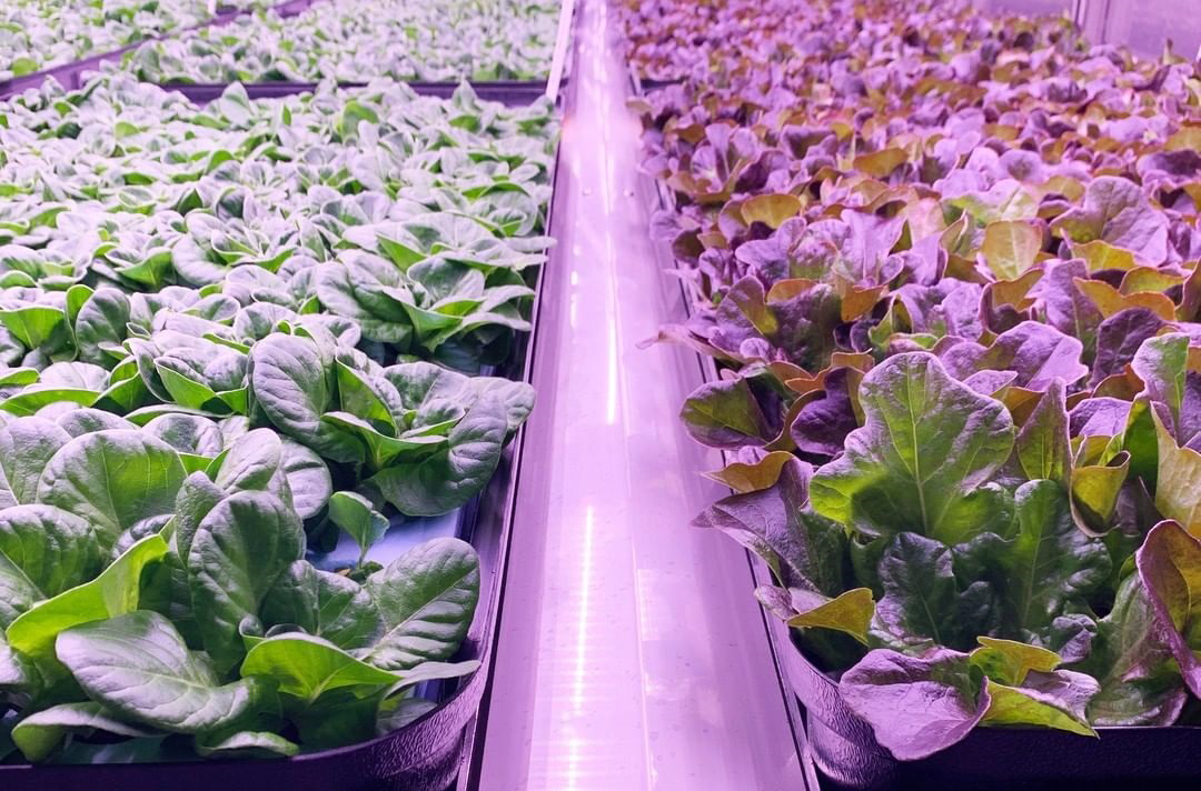 Vertical Led Grow Light is a Great Subtitute for Sunlight