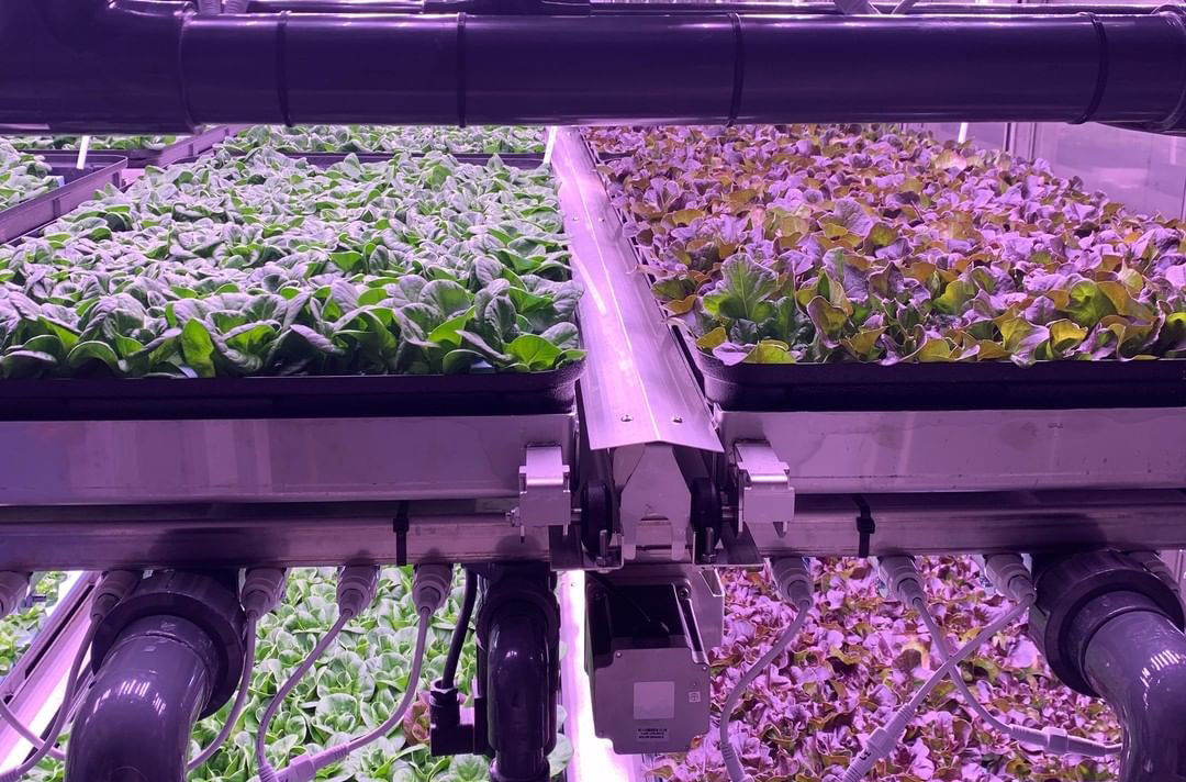 Vertical Farming Lighting in NFT Rolling Racking System
