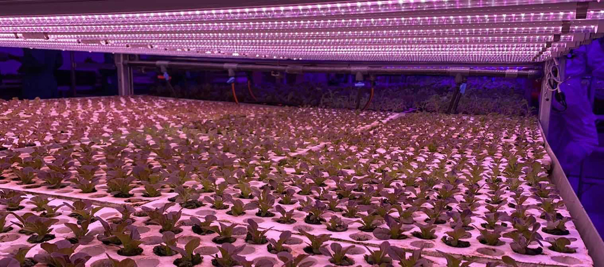 Vertical Farming & LED Grow Lights